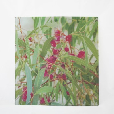 pink eucalyptus flower chopping board