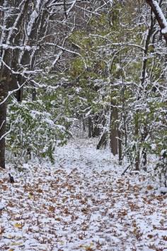 winter path 11-10-2018 3-30-24 PM