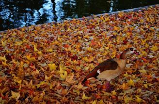 Autumn leaves at Parc Bordelais