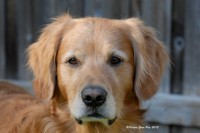 Picture Your Pets Chicago Pet Photography Services | Dogs