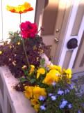 My neighbor's flower box.