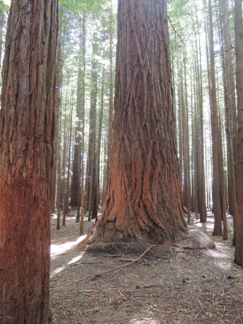 Čevenkastá kôra stromov