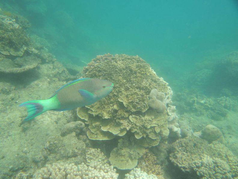 Koralová bariéra 6