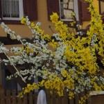 Frühlingsgefühle – ich liebe meinen Garten