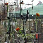 Fensterdeko aus Reagenzgläsern #DIY #Blumendeko #kreativ