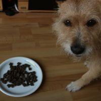 Pidufo hat getestet - Dog's Health Adult mit Huhn & Kartoffeln #futtertest #pidufotest