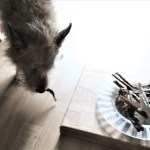 Leckerein für unseren kleine Gourmet – Pidufo schwelgt im 7. Himmel
