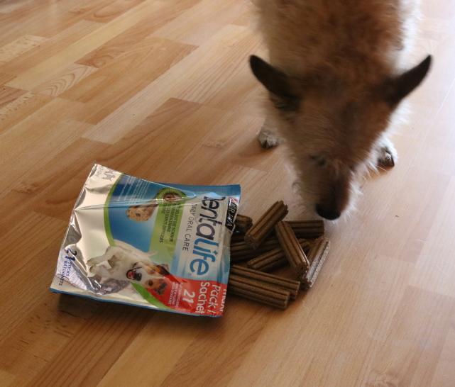 Mundgeruch beim Hund – was kann ich tun?