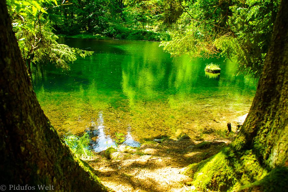Biosphären Reservat im Thüringer Wald