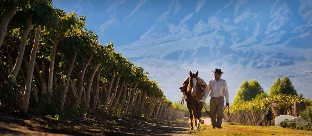 Wine Experience in Cafayate - Visit Northwest Argentina