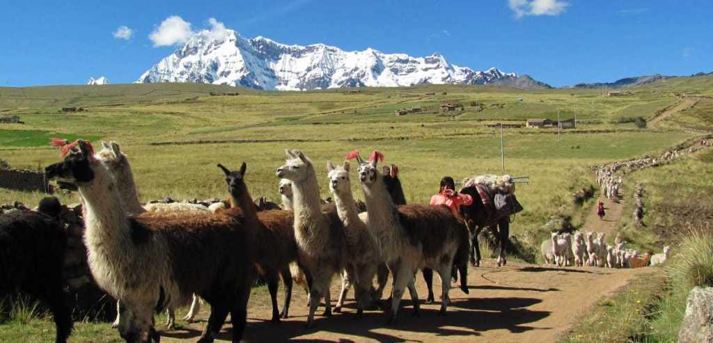Ausangate Trek - Llama Caravan