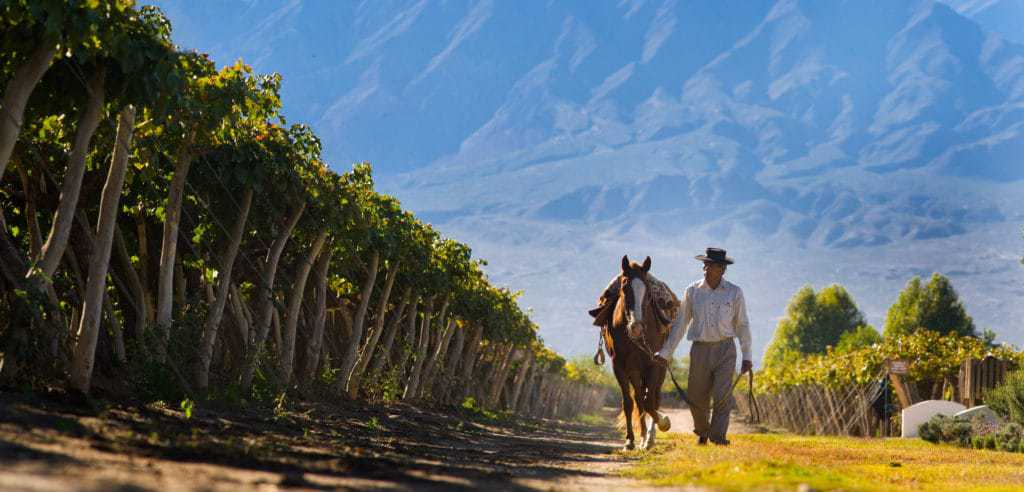Wine Tours in Northern Argentina