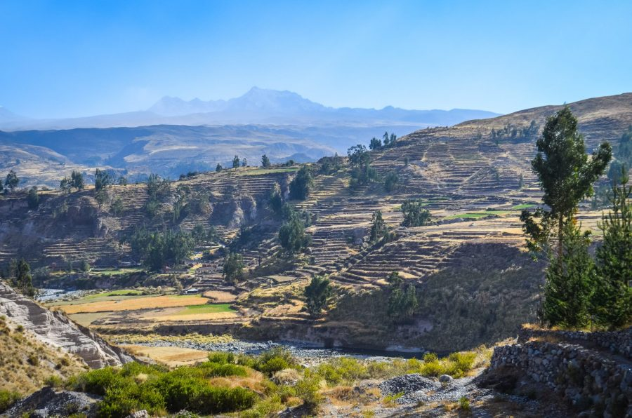 Homestay tours in Colca Canyon - Agricultural terraces.