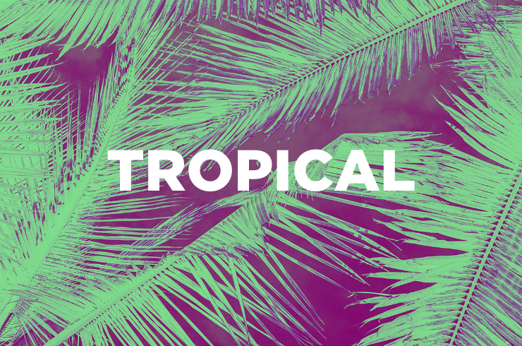 shop-tropical@2x