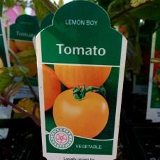 Lemon Boy Tomato
