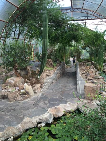 Desert Green House