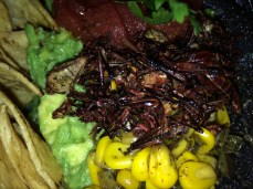 Guacamole with grasshoppers