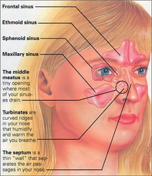 Sinuses | Piedmont Ear, Nose, and Throat