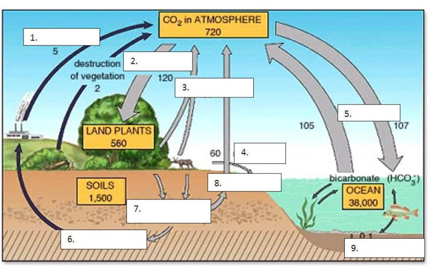 Results for Simple Carbon Cycle Diagram Labeled The Banque – Carbon Cycle Diagram Worksheet