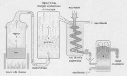 Les hydrolats, c'est quoi ? - Pieds en Eventail - Antony