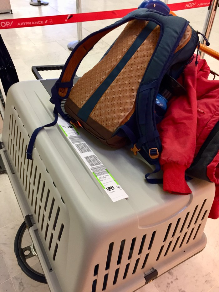chien voyageant en soute - Air France
