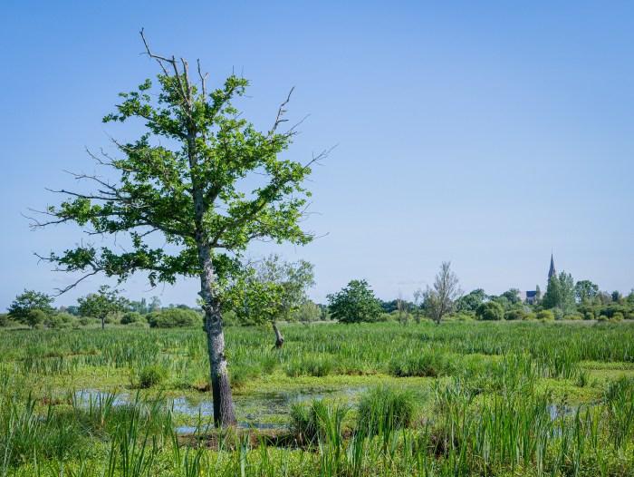 parc régional de briere arbre église saint Joachim