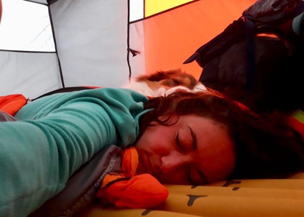 dormir en tente avec son chien voyage à vélo
