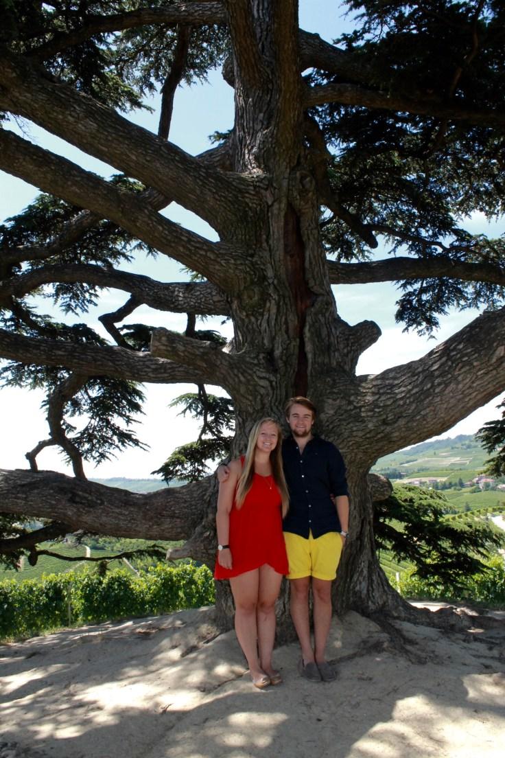 tbt cedar tree