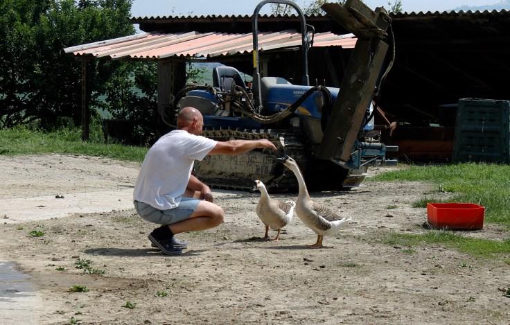 Giuliano Corino and the Geese
