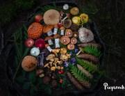 Kompozycja z grzybów