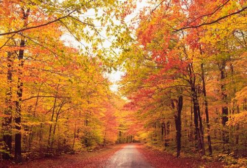 New-England-As-the-trees-of-Connecticut-turn-red