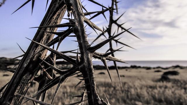 thorns-1327796_640