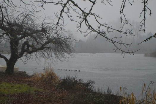 Tule Lake - the ducks are swimming again, around the remaining ice