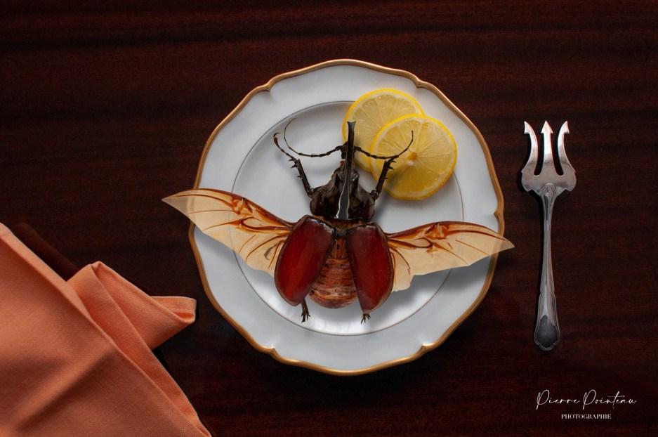Photo culinaire d'un coléoptère dans une assiette.