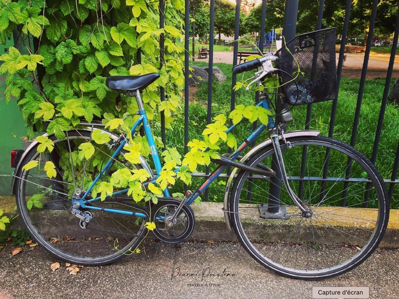 Photographie d'un vélo colonisé par la végétation, devant les grilles du square de la ménagerie, à Strasbourg, quartier Neudorf.