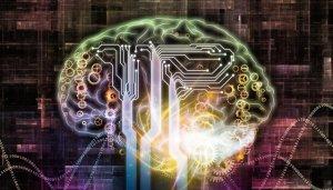 ブログ 脳科学