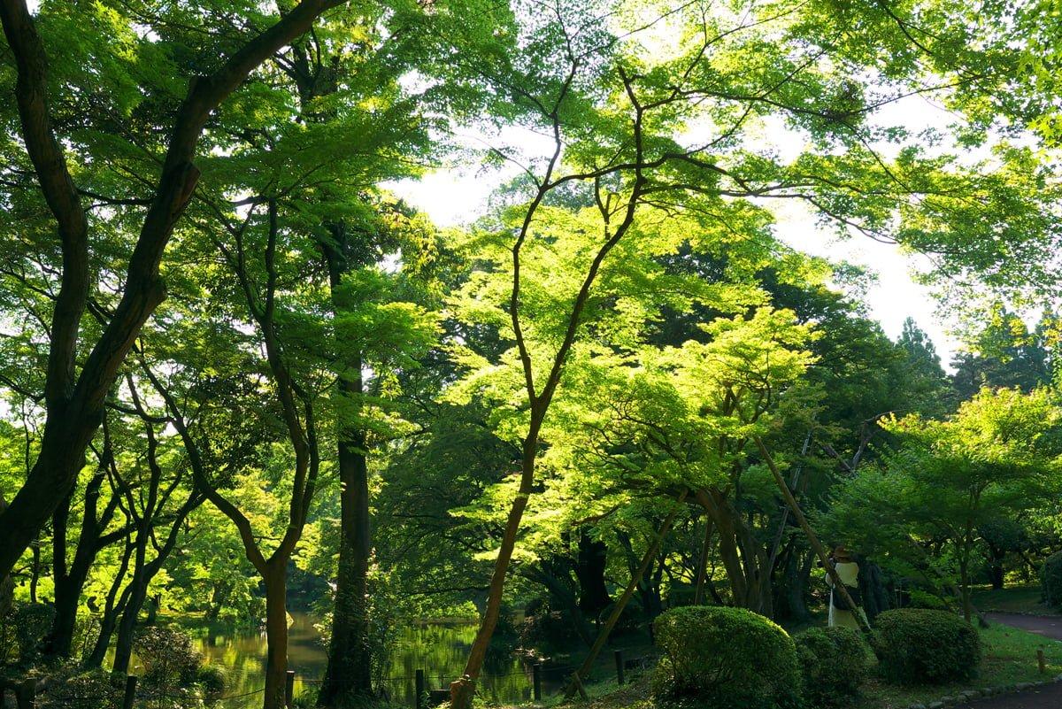 京都 府立植物園