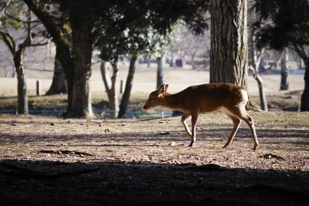 奈良 奈良公園