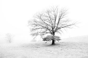 White Tree - Ref. B02