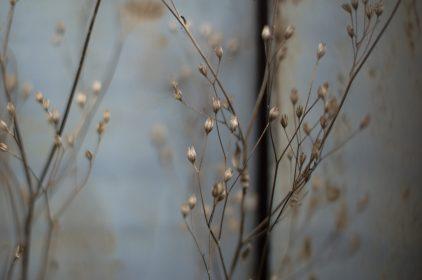 Blue Flowers - Ref. B06