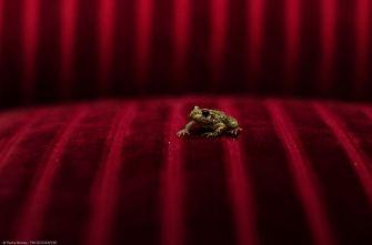 Red Frog - Ref. B15