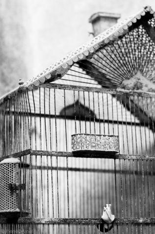 SNAIL BIRD - Ref.D14