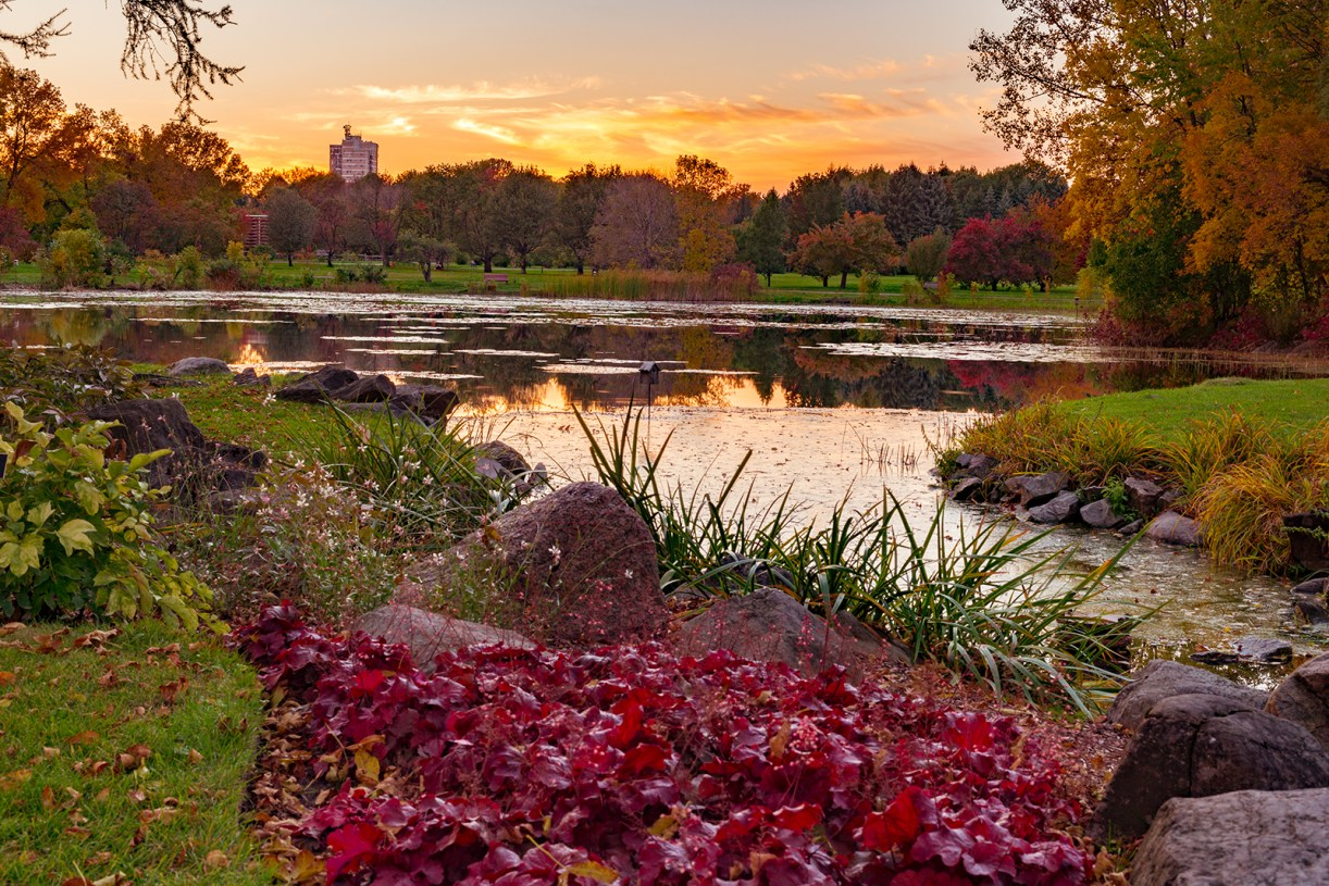jardin_botanique_montreal_botanical_autumn_pond_sunset_euchera_s_w_DSC3692