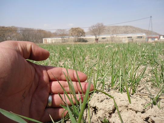 Consultation en Afghanistan