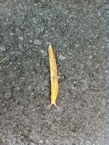 Good Morning Slug!