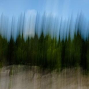 Forêt III