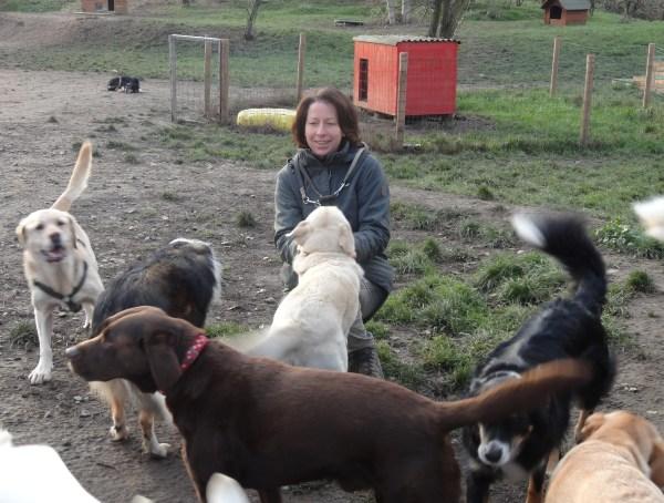 Hundemädel 3011 hunde