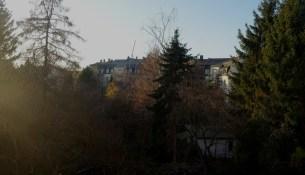 Tichatscheckstraße 37 Bäume
