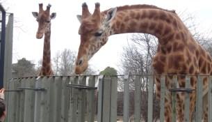 Zoo Dresden geööfnet
