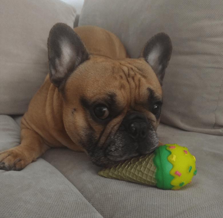 Zabawka gryzak dla psa - lód w rożku